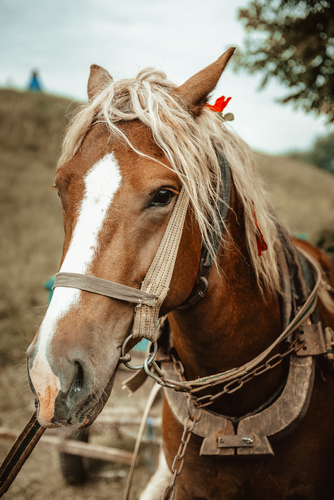 feeding horse pellets