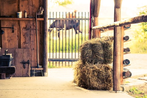 hay cubes for horses