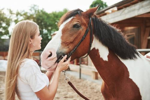 gentle horse training