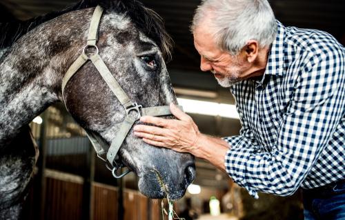 senior horse feed
